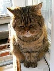 grustny-kotik